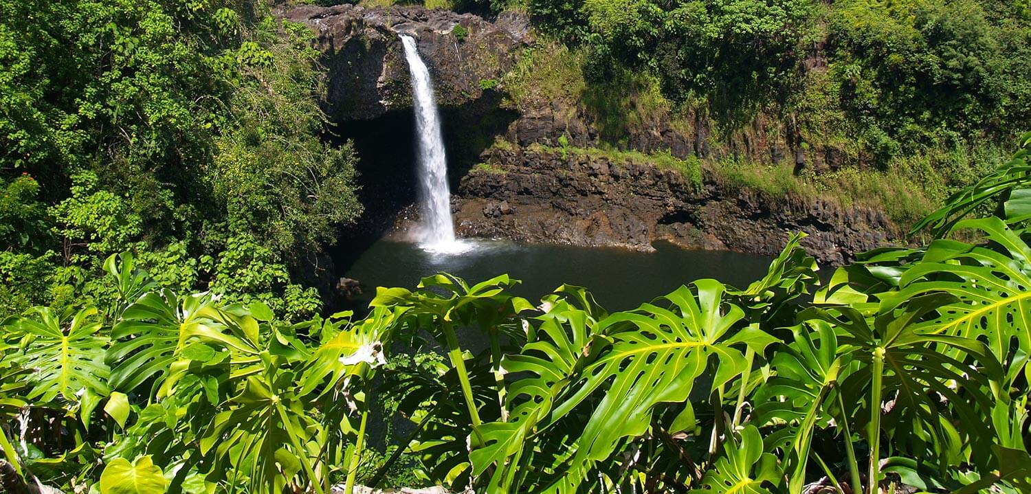 A small waterfall surrounded by dense foliage in Hilo