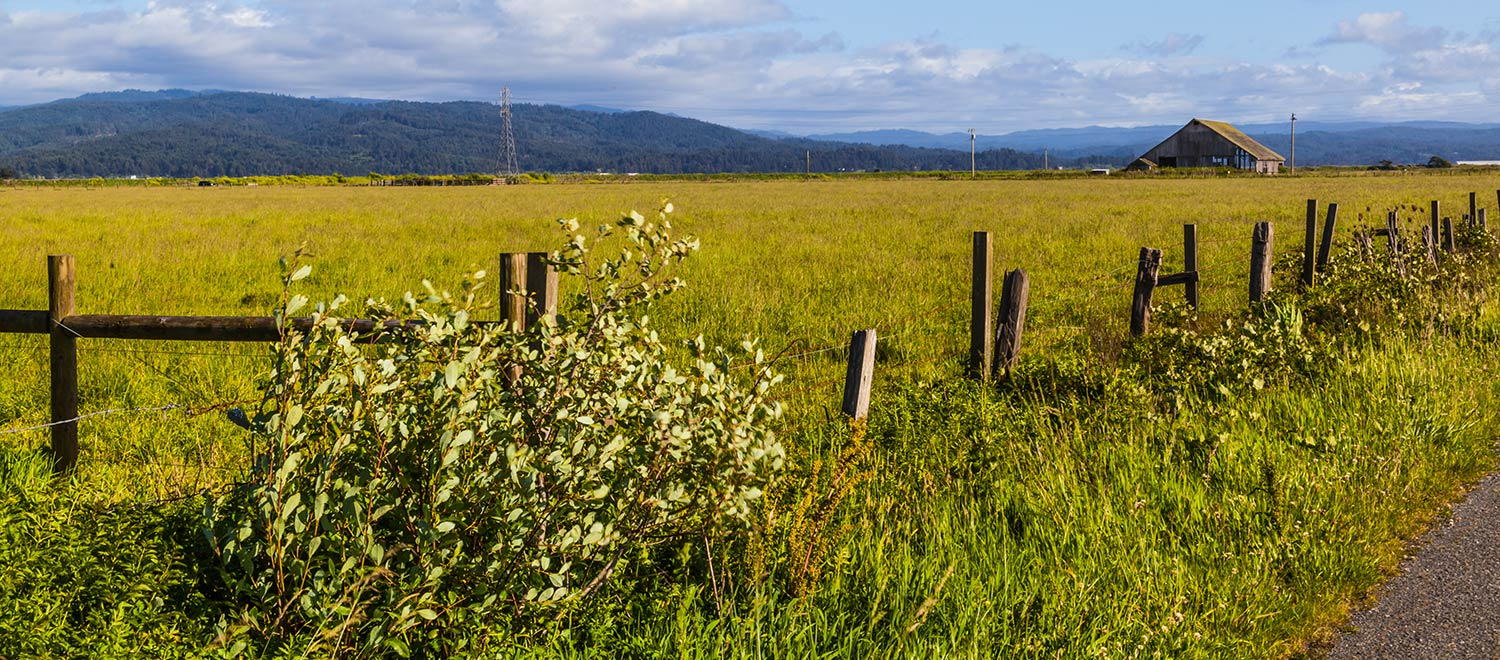 Yellow-green field lined with a broken-down wooden fence in Arcata