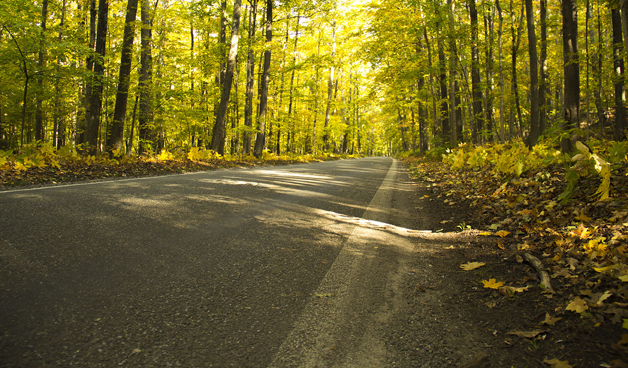 Paved road with sunlight peeking through the leaves of trees in Flint
