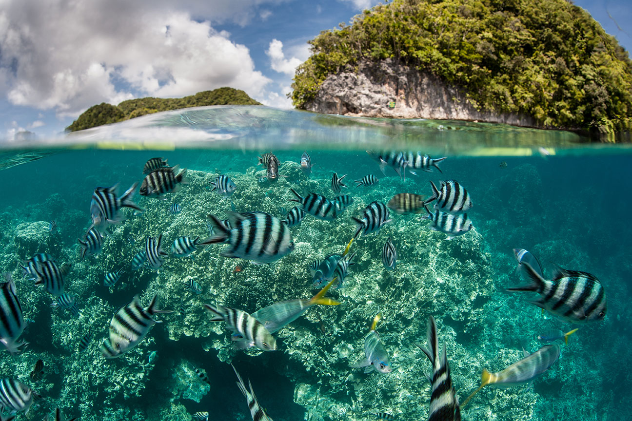 Striped fish swim in a shallow lagoon next to rock islands in Palau